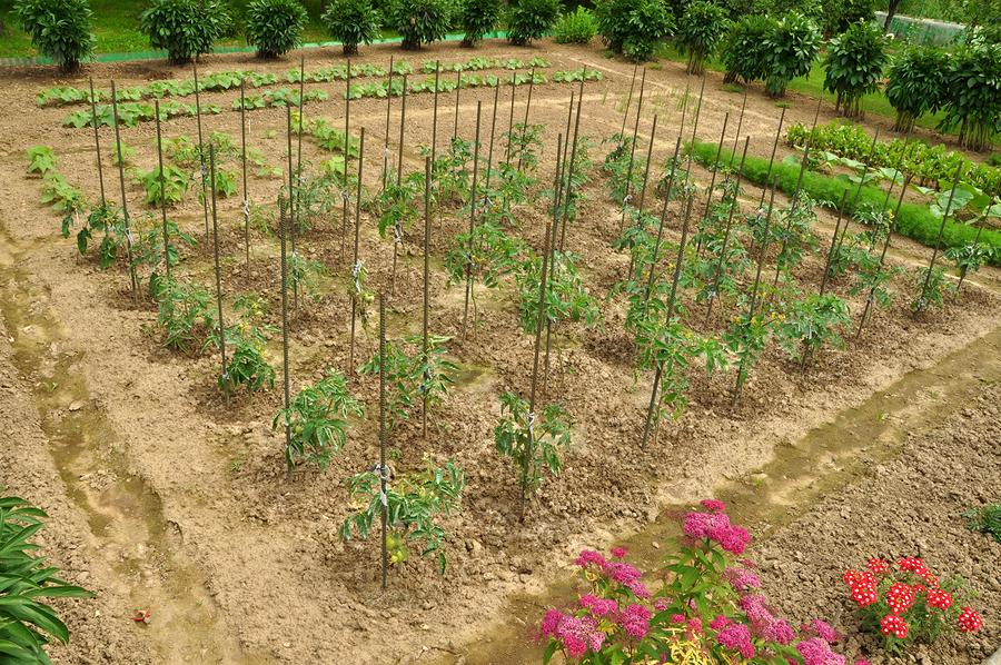 Italian vegetable gardens images for Large vegetable garden
