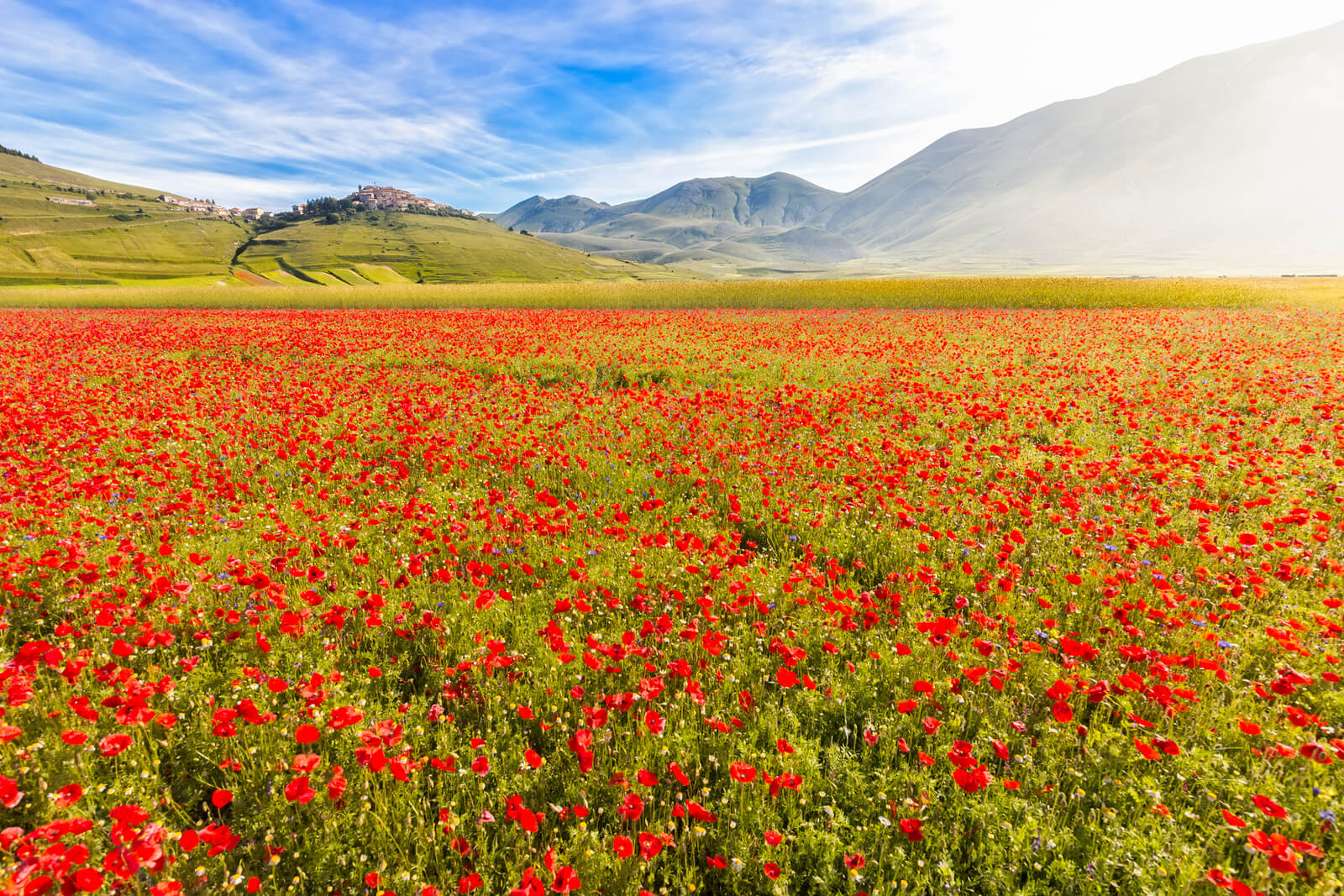 Colorful blooming of flowers at Pian Grande near Castelluccio di Norcia