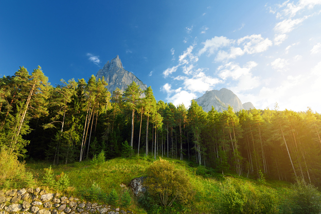 Pine woods and the Dolomites on the Renon plateau