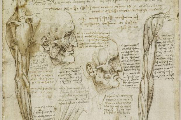 Buckingham Palace Exhibits Rare da Vinci Anatomy Studies ...