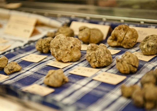 The Alba White Truffle Fair: Celebrating One of the World's Most Prized Culinary Treasures