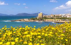 View of the coast in Alghero with blooming flowers