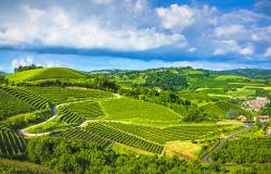 Vineyards and hills of Langhe Italy