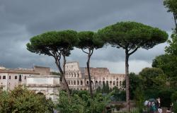 Rome's pine trees with Colosseum in the background