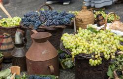 Autumn Wine Festivals in Tuscany 2019