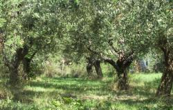 350sqm farm house, 7 bedrooms, with olive grove, 2km to the beach.  3