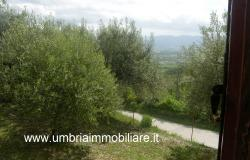 Ref. 157 villa - country house near to Cannara, Assisi and Perugia city 19