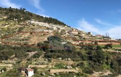 A941 Land for Sale in Bordighera, Montenero area, with a beautiful sea view. 14