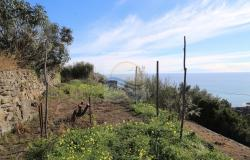 A941 Land for Sale in Bordighera, Montenero area, with a beautiful sea view. 12