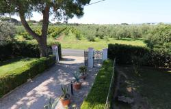 Donoratico, in the Tuscan countryside single house of two apartments with olive grove 2