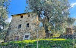 B1133 Rustic with sea view for sale in Bordighera - Sasso. 0