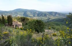 Restored Country Home for sale in Tuscany near Arezzo Ref. TCR-004  7