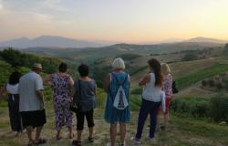 Italian in the vineyards experience