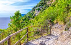 A walking trail in the Cinque Terre Park