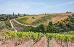 hills of Tuscany with vineyard for production of wines Chianti and Brunello di Montalcino