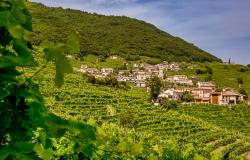 Vineyards in Veneto where Prosecco is made