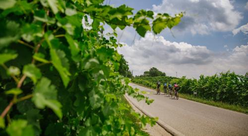 Cycling Tour on the Prosecco Road Conegliano-Valdobbiadene Unesco herritage  3