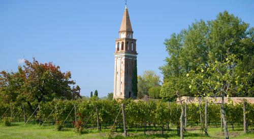 Vineyard near the old bell tower on the Mazzorbo island on a sunny afternoon. Venice, italy