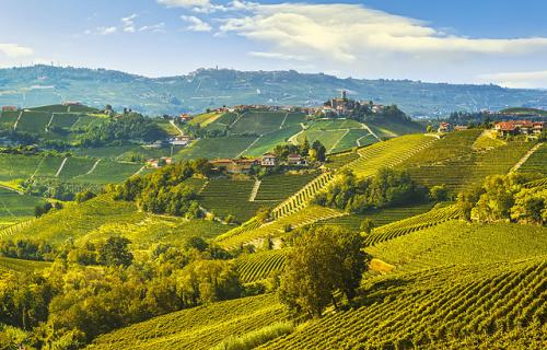 Vineyards landscape in Langhe Piedmont Italy