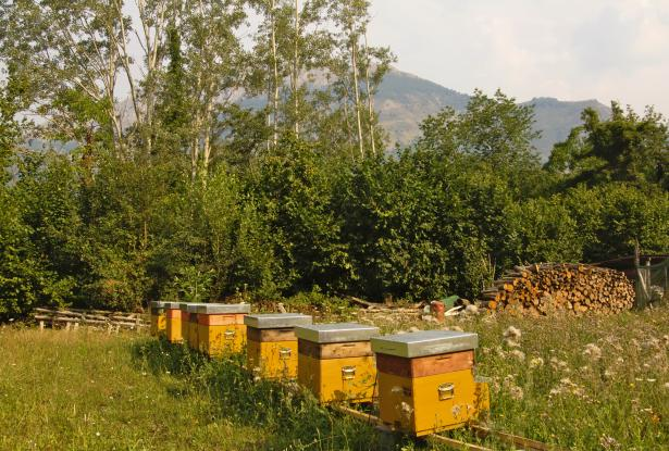 Sapori & Saperi Adventures – Beehives at San Cassiano, Tuscany