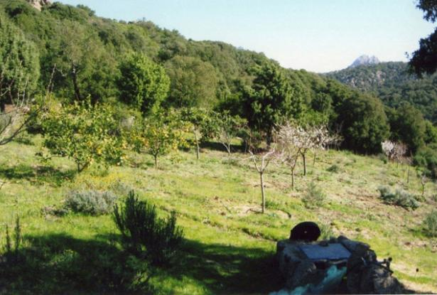 Property for sale near San Pantaleo 13