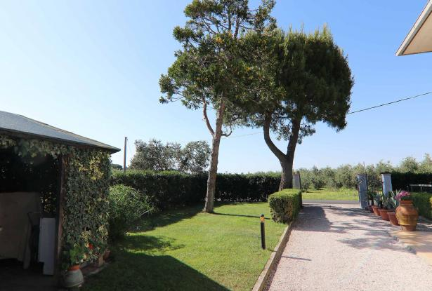 Donoratico, in the Tuscan countryside single house of two apartments with olive grove 41