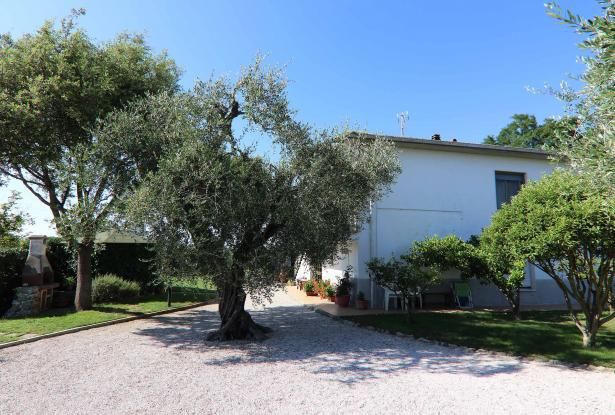 Donoratico, in the Tuscan countryside single house of two apartments with olive grove 42