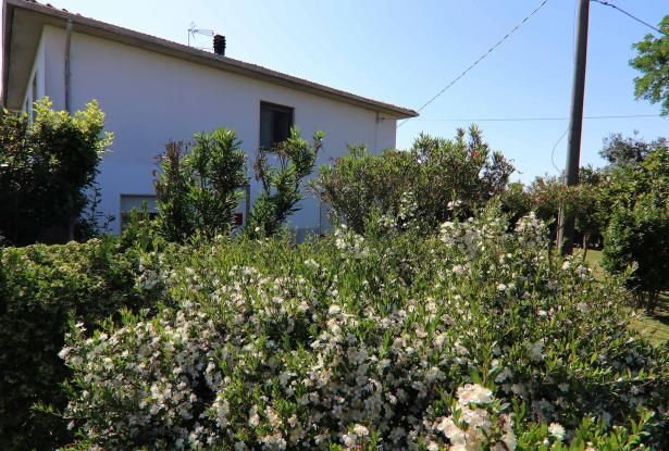 Donoratico, in the Tuscan countryside single house of two apartments with olive grove 43