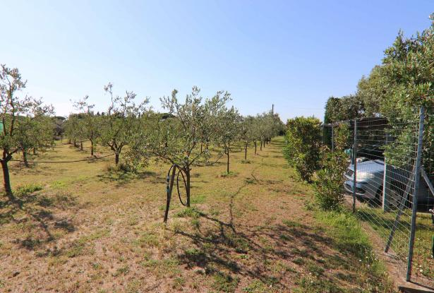 Donoratico, in the Tuscan countryside single house of two apartments with olive grove 46