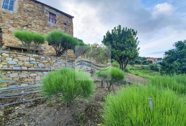 A1111 Rustic with sea view for sale in Bordighera  5