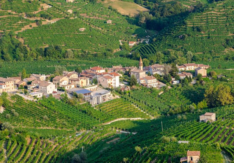 Prosecco vineyards in the Veneto region of Italy