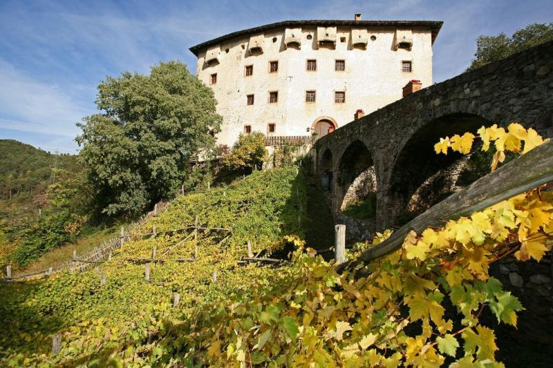 Italy's oldest vines
