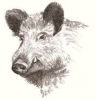 Profile picture for user Wild Boar Brewing